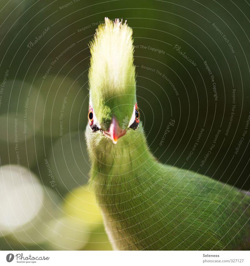 Wie, Montag? Natur Tier Umwelt lustig natürlich Garten Vogel Wildtier Schönes Wetter Feder weich nah Tiergesicht frech Schnabel Schrecken