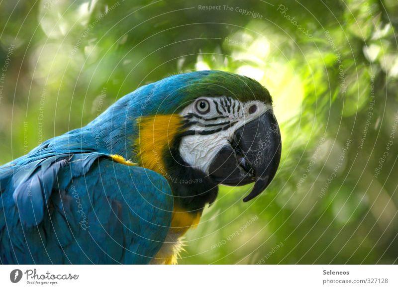 Blickfang Ferien & Urlaub & Reisen Tourismus Ausflug Sommer Sommerurlaub Sonne Zoo Umwelt Natur Pflanze Baum Garten Park Tier Wildtier Vogel Tiergesicht Flügel