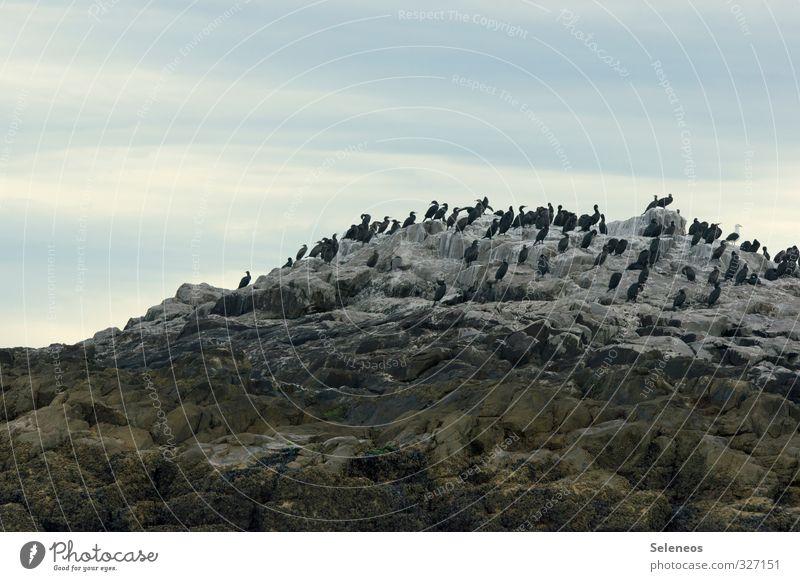 Versammlungsfreiheit Himmel Natur Ferien & Urlaub & Reisen Landschaft Wolken Tier Ferne Umwelt Küste natürlich Freiheit Felsen Vogel Wildtier Tourismus Ausflug