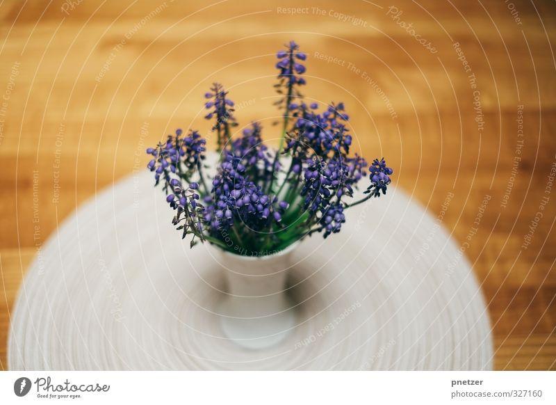 . Natur blau schön Pflanze Blatt Haus Umwelt Gefühle Innenarchitektur Blüte Stil Garten Freizeit & Hobby Wohnung elegant Lifestyle