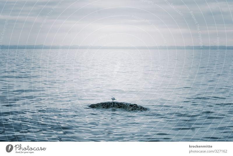 Zwischenlandung Himmel Natur blau Wasser Einsamkeit ruhig Tier Wolken See Stein Felsen Vogel Wellen warten Pause Seeufer