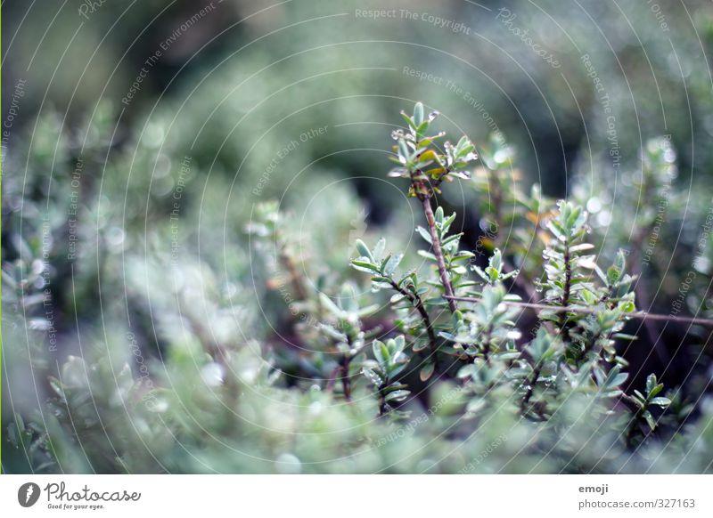 verregnet Natur grün Pflanze Umwelt Frühling grau natürlich Sträucher Wassertropfen
