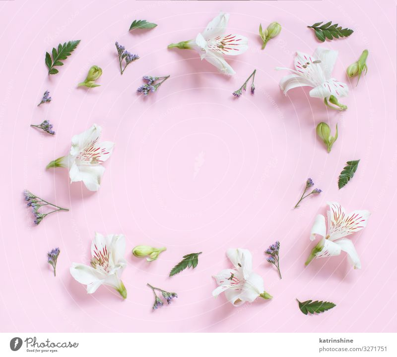 Blumen auf einem hellrosa Hintergrund Design Dekoration & Verzierung Hochzeit Frau Erwachsene Mutter oben Kreativität romantisch flache Verlegung Alstromerien