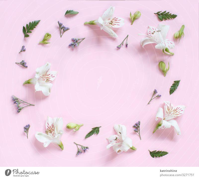 Frau Blume Erwachsene Textfreiraum rosa oben Design Dekoration & Verzierung Kreativität Hochzeit Mutter Entwurf geblümt Engagement