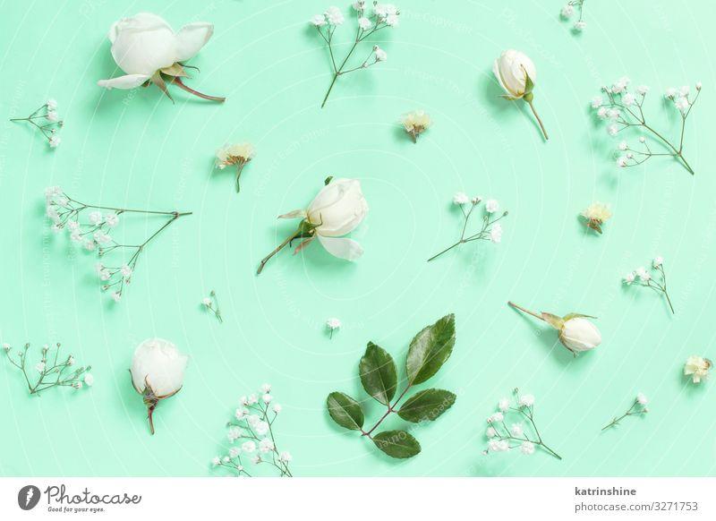 Blumen auf hellblauem Hintergrund Design Dekoration & Verzierung Hochzeit Frau Erwachsene Mutter Rose oben Kreativität romantisch hell-blau flache Verlegung