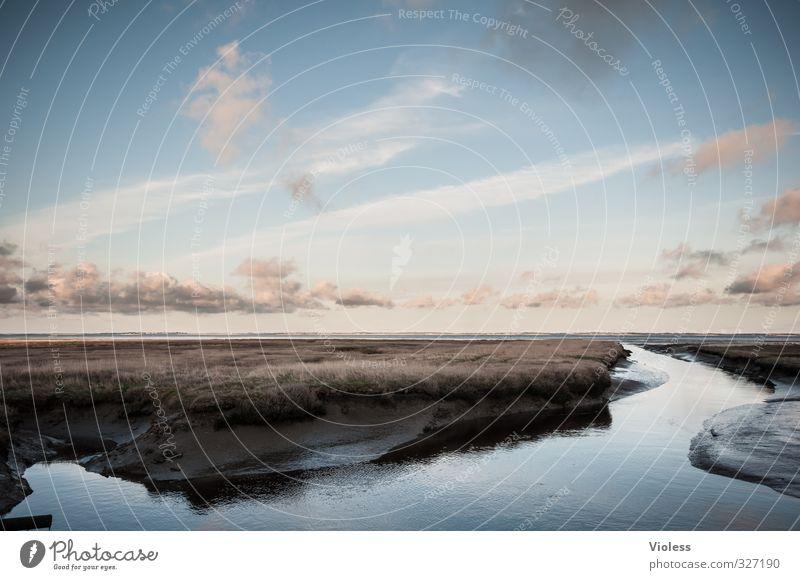Rømø | ...fairytale IV Ferien & Urlaub & Reisen Ausflug Abenteuer Freiheit Sommer Meer Insel Umwelt Natur Landschaft Gras Küste Nordsee Moor Sumpf entdecken