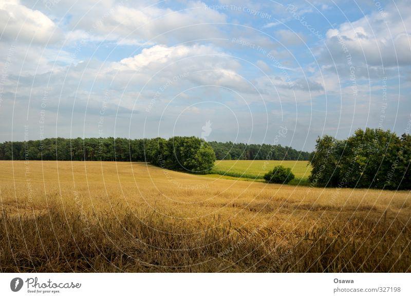 Brandenburgische Landschaft Umwelt Natur Pflanze Erde Sommer Baum Gras Nutzpflanze Feld Getreidefeld Hügel Landwirtschaft Kulturlandschaft Wolken Wolkenhimmel