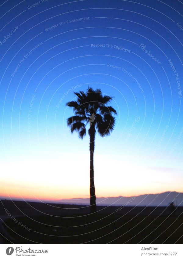 palme Himmel blau dunkel Palme Reaktionen u. Effekte