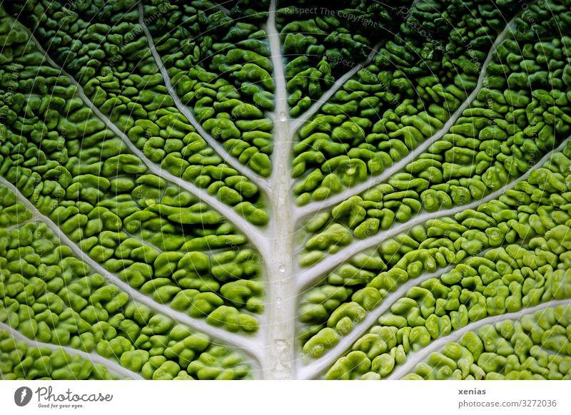 Detailaufnahme eines Wirsingblattes Bioprodukte Vegetarische Ernährung Diät Baum Blatt frisch Gesundheit lecker grün weiß Foodfotografie Baumstruktur