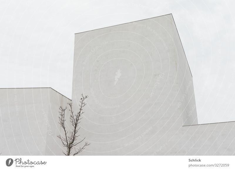 Modern Architektur Baum Stadt Bauwerk Gebäude hässlich neu trist grau modern fensterlos kahl leblos ohne Fenster Äste junger Baum Beton kubisch grau in grau