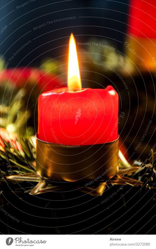 Advent, Advent Weihnachten & Advent rot Erholung Winter schwarz Wärme Religion & Glaube Feste & Feiern Dekoration & Verzierung leuchten gold glänzend Idylle