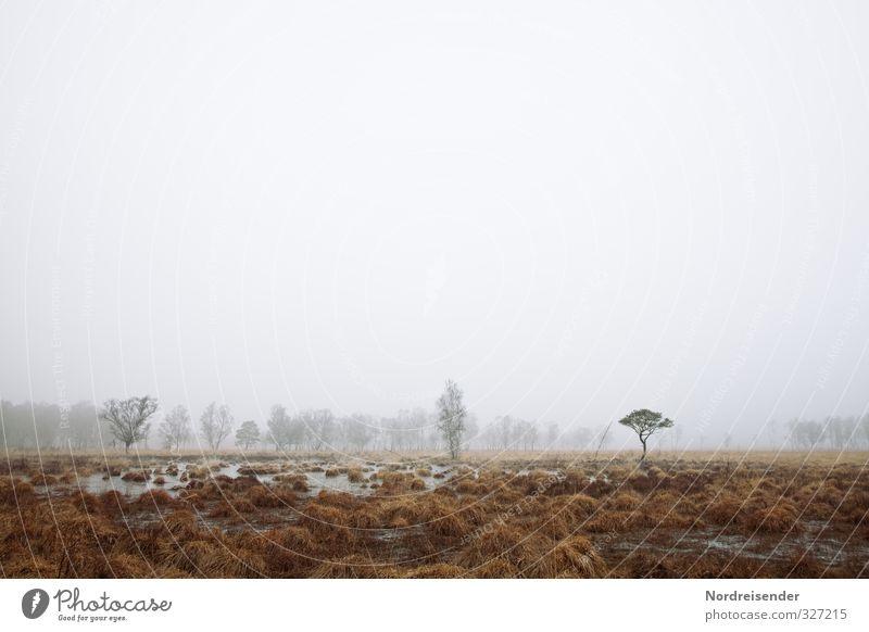 Nebelzeit ruhig Meditation Ausflug wandern Natur Landschaft Pflanze Herbst Winter Klima Wetter schlechtes Wetter Baum Wald Moor Sumpf Traurigkeit dunkel