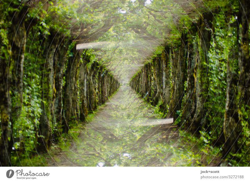 Doppelallee Gartenbau Landschaftsarchitektur Sommer Klima Park Allee Bayreuth Wege & Pfade außergewöhnlich fantastisch lang oben viele verrückt braun grün
