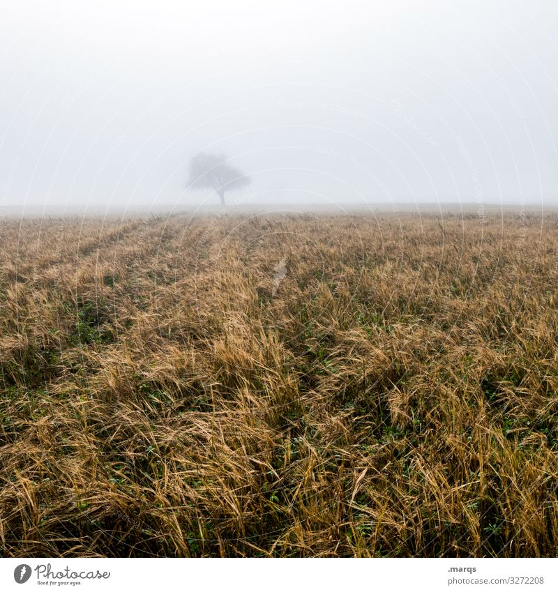 Baum im Nebel Laubbaum Feld ländlich Herbst trist Horizont düster Landschaft Natur Morgendämmerung