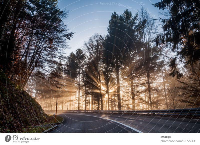 Morgensonne Natur Wolkenloser Himmel Klima Schönes Wetter Wald Verkehr Verkehrswege Straße Kurve fahren schön Stimmung Mobilität Ziel Farbfoto Außenaufnahme