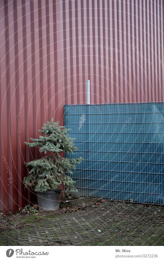 geschenkt ist noch zu teuer Umwelt Herbst Winter Pflanze Baum Industrieanlage Gebäude Fassade trist Zaun Halle Lagerhalle Tanne Weihnachtsbaum