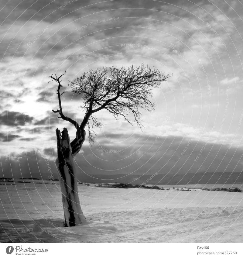 . Himmel schön weiß Baum Einsamkeit Landschaft ruhig Wolken Winter schwarz dunkel kalt Berge u. Gebirge Traurigkeit Schnee Gefühle