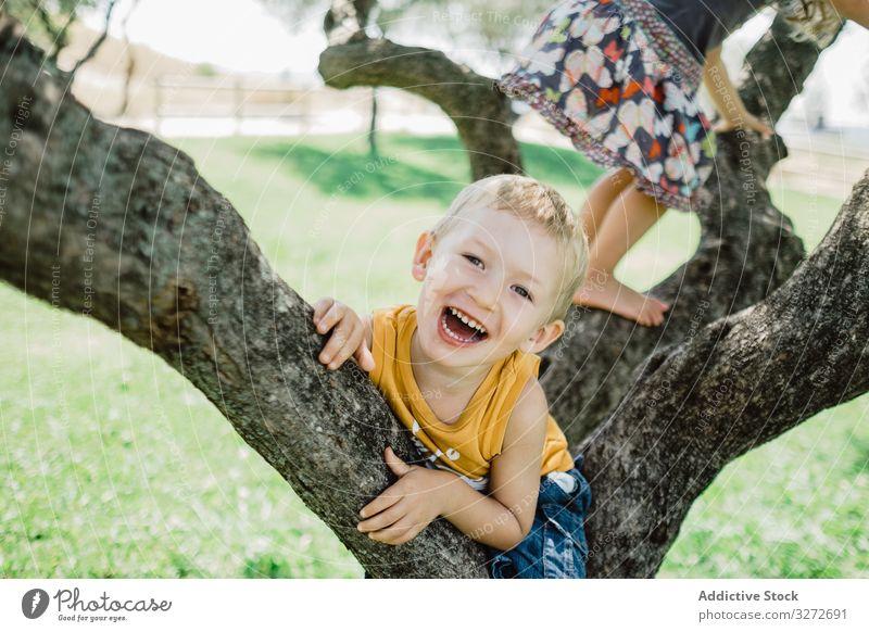 Verspielte Kinder klettern Baum auf sonniger grüner Wiese Aufstieg Garten Spaß haben Geschwister Kindheit Natur Sommer Landschaft Abenteuer Park aktiv Sport