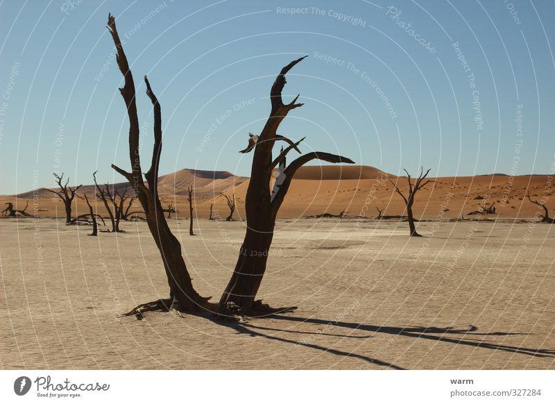 Wassermangel Natur blau Baum Einsamkeit Landschaft ruhig Ferne gelb Wärme Sand Stil braun orange Erde Klima Schönes Wetter