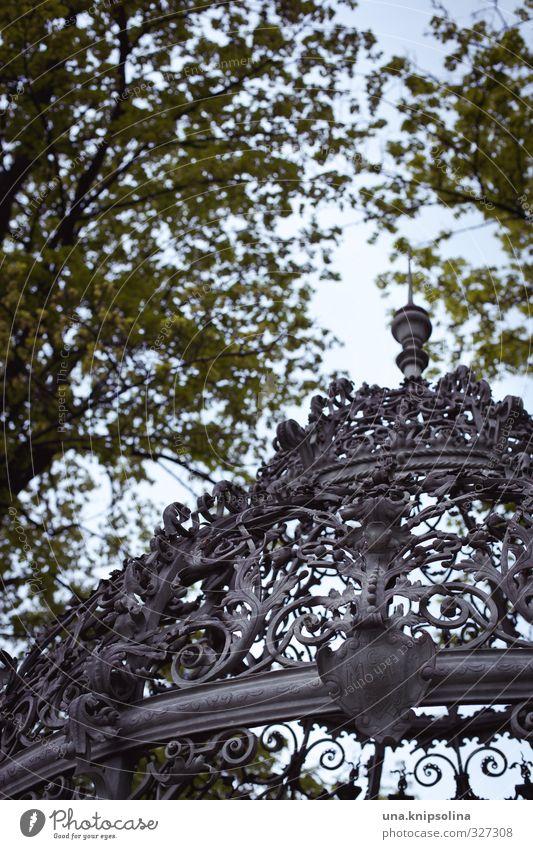 am brunnen unterm baume... Natur Pflanze Baum Blatt Graz Schlossberg Metall ästhetisch historisch Kitsch rund Ornament Brunnen Gewölbe Gitter Ranke Wappen Dach