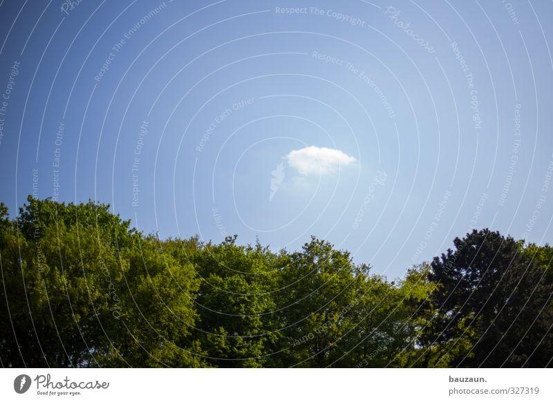 sillen. Himmel Natur blau Ferien & Urlaub & Reisen grün weiß Sommer Baum Freude Wolken Erholung Wald Wärme Frühling Garten träumen