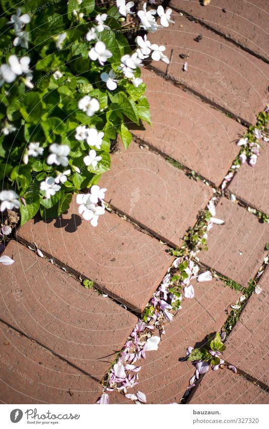 wegesrand. grün weiß Pflanze Erholung rot Blume Blatt Gefühle Wege & Pfade Blüte Stein gehen Garten Linie Stimmung Park