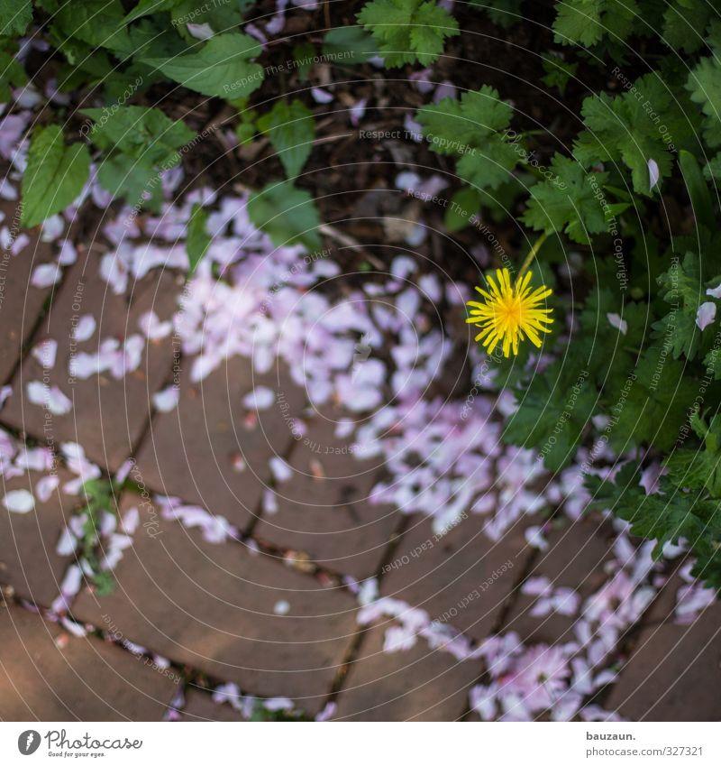 randerscheinung. grün Pflanze rot Blume Blatt gelb Wege & Pfade Blüte Stein Garten Linie gehen rosa Park Platz Ausflug