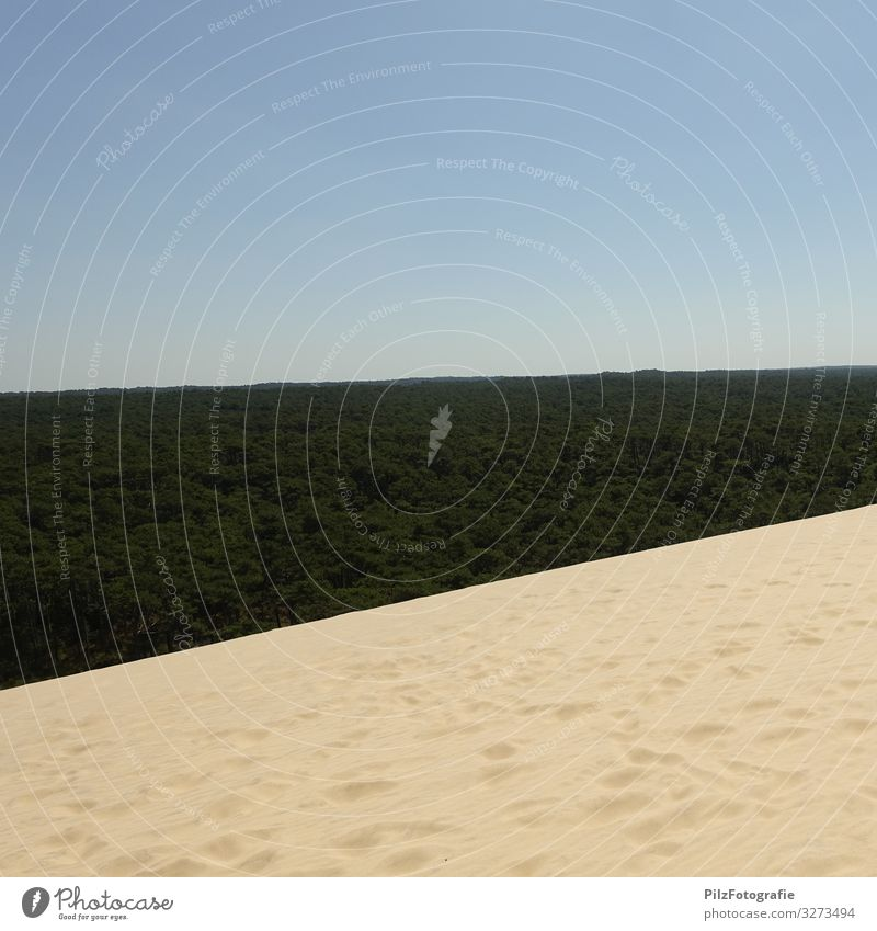 Dune du Pilat Umwelt Natur Landschaft Sand Himmel Wolkenloser Himmel Baum Wald Düne Stranddüne Unendlichkeit blau braun grün Symmetrie Ferien & Urlaub & Reisen