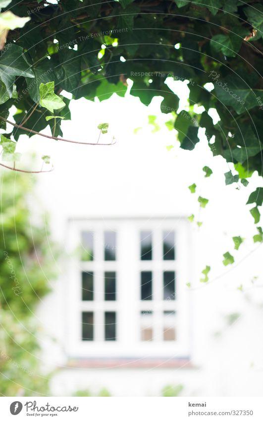 Durchgang Pflanze Efeu Blatt Grünpflanze Mauer Wand Fenster Wachstum hell grün weiß bewachsen Farbfoto Gedeckte Farben Außenaufnahme Menschenleer Tag Licht