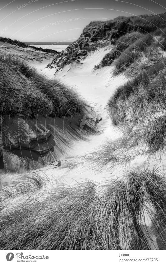 Von Ewigkeit zu Ewigkeit Himmel Natur weiß Landschaft schwarz Wege & Pfade Küste grau hell Horizont Idylle Insel Schönes Wetter Nordsee Dünengras Amrum
