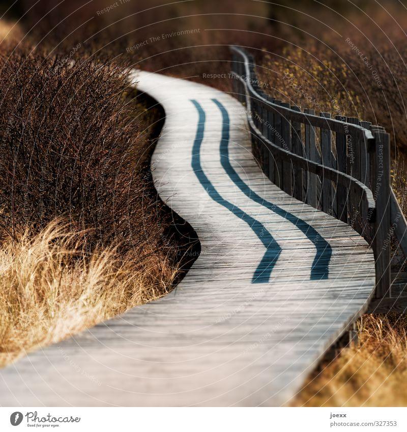 Und wo bist Du? schön Landschaft schwarz gelb Wege & Pfade braun Park Insel Schönes Wetter Amrum