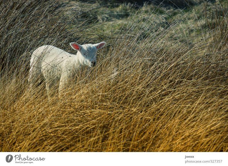 18, 19, 20… ich kooommeee! Natur schön grün weiß Sommer Tier Tierjunges Wiese Gefühle klein braun Stimmung Idylle warten stehen Schönes Wetter