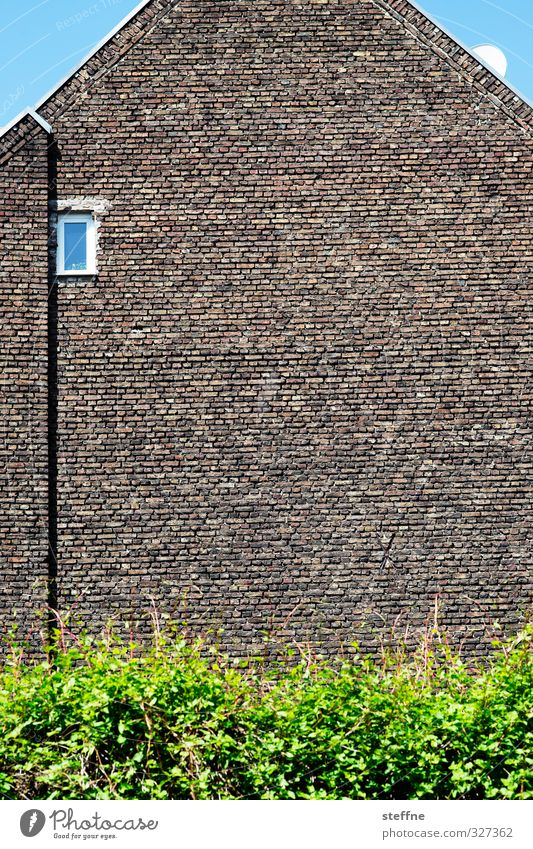 Guckloch Haus Fenster Wand Mauer Fassade Sträucher ästhetisch Schutz Wolkenloser Himmel