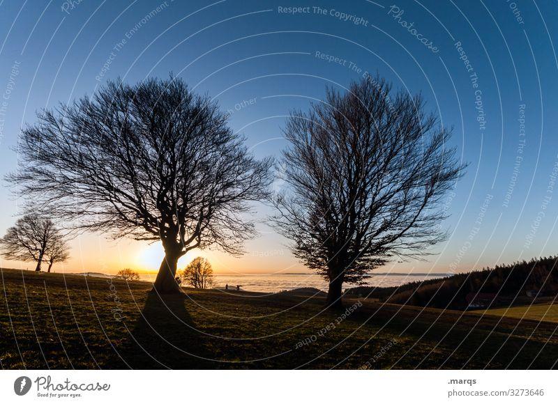 Sonnenuntergang auf dem Schauinsland Ausflug Ferne Landschaft Urelemente Herbst Klima Licht Dämmerung Schönes Wetter Baum Kitsch schön Stimmung Silhouette