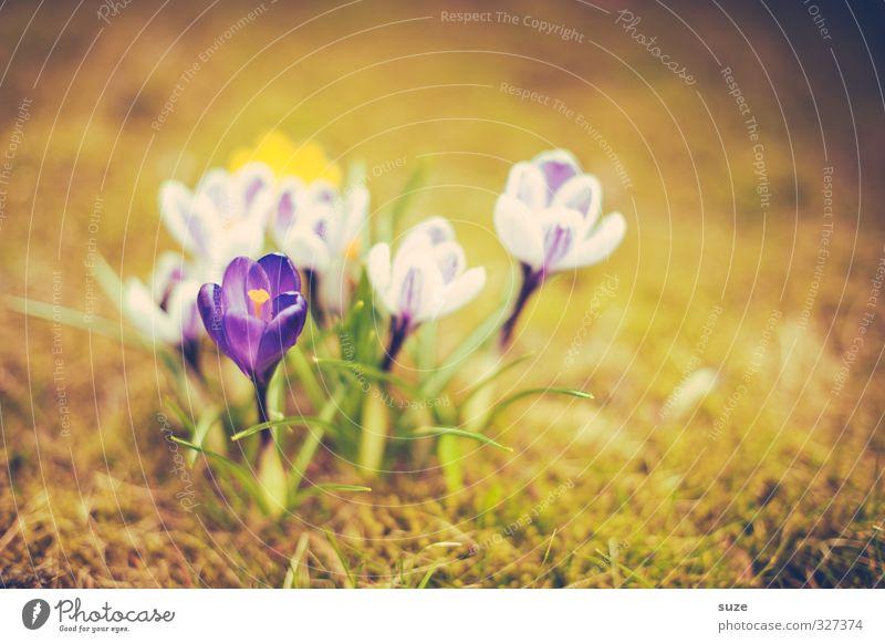 Küssen kann man nicht alleine ... Duft Garten Natur Pflanze Frühling Blume Blüte Wiese Blühend leuchten Wachstum authentisch natürlich retro gelb grün