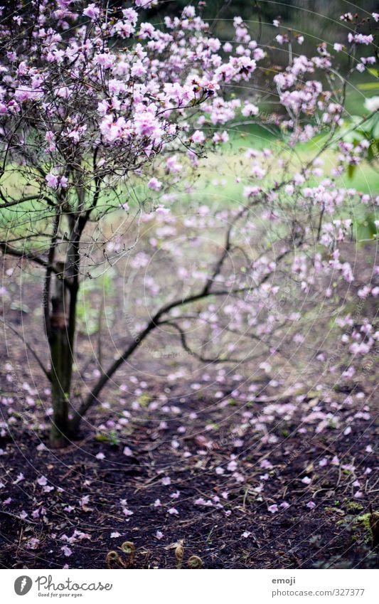 leela Natur Pflanze Frühling Blüte natürlich Sträucher violett