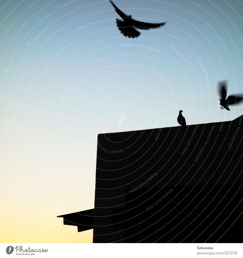 Alle Tauben fliegen hoch Himmel Natur Tier Haus Umwelt Bewegung Vogel fliegen Wildtier Ausflug Dach Flügel Wolkenloser Himmel Taube