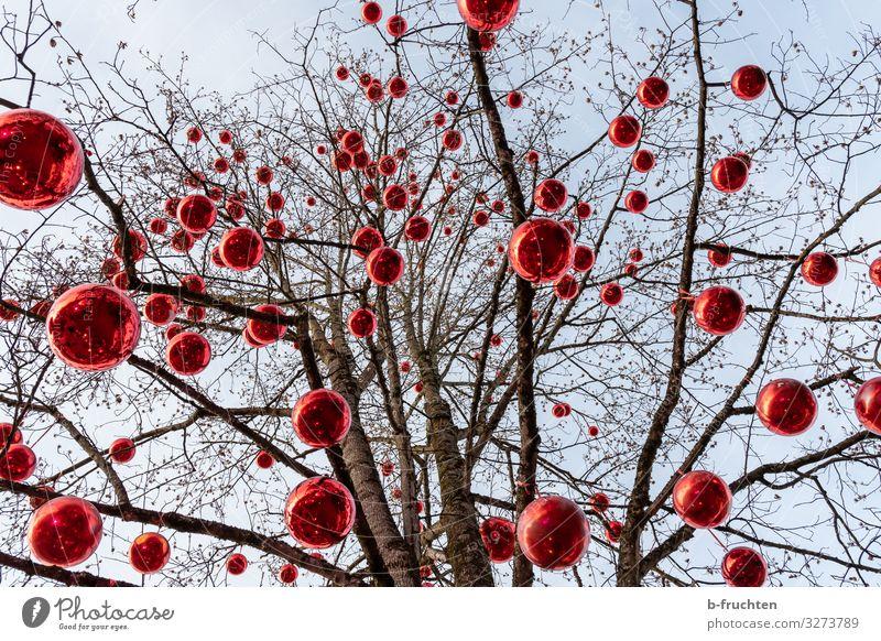 Geschmückter Baum mit roten Kugeln Weihnachten & Advent Umwelt Feste & Feiern außergewöhnlich Dekoration & Verzierung Park ästhetisch Fröhlichkeit Zeichen