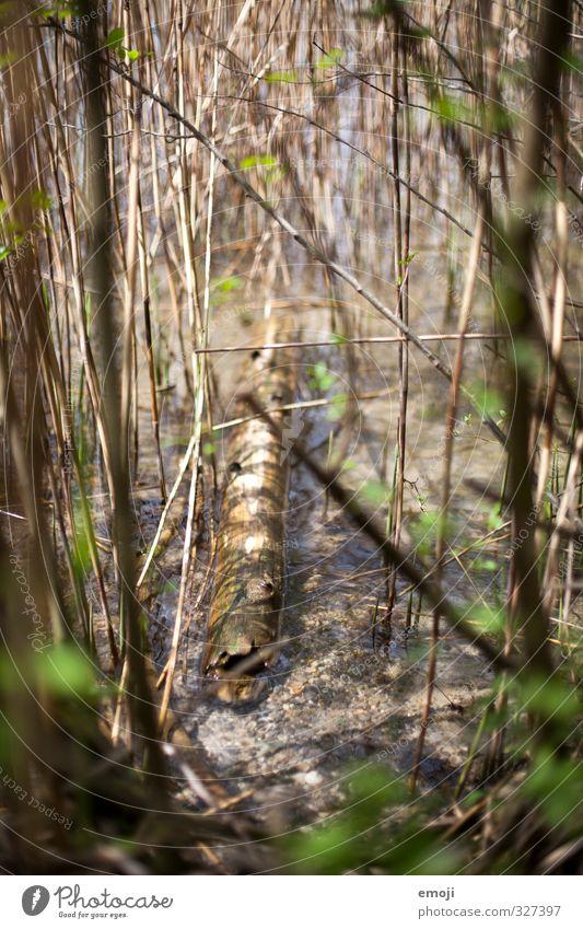 Schwemmholz Umwelt Natur Wasser Pflanze Seeufer nass natürlich Treibholz Holz Farbfoto Außenaufnahme Nahaufnahme Menschenleer Tag Schwache Tiefenschärfe