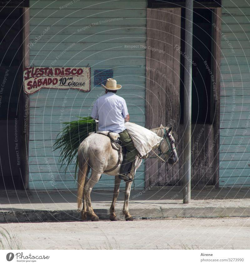 Fiesta Disco Freude Nachtleben Party Club ausgehen Feste & Feiern Reiter Mann Erwachsene Rücken 1 Mensch Kuba Kubaner Sonnenhut Pferd Tier exotisch grau türkis