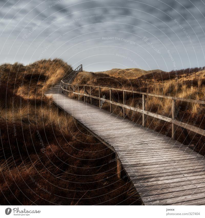 Und wenn Du einsam bist Himmel Natur schön Landschaft Wolken ruhig gelb Wiese Wege & Pfade grau braun Horizont Wetter Idylle Insel Hoffnung