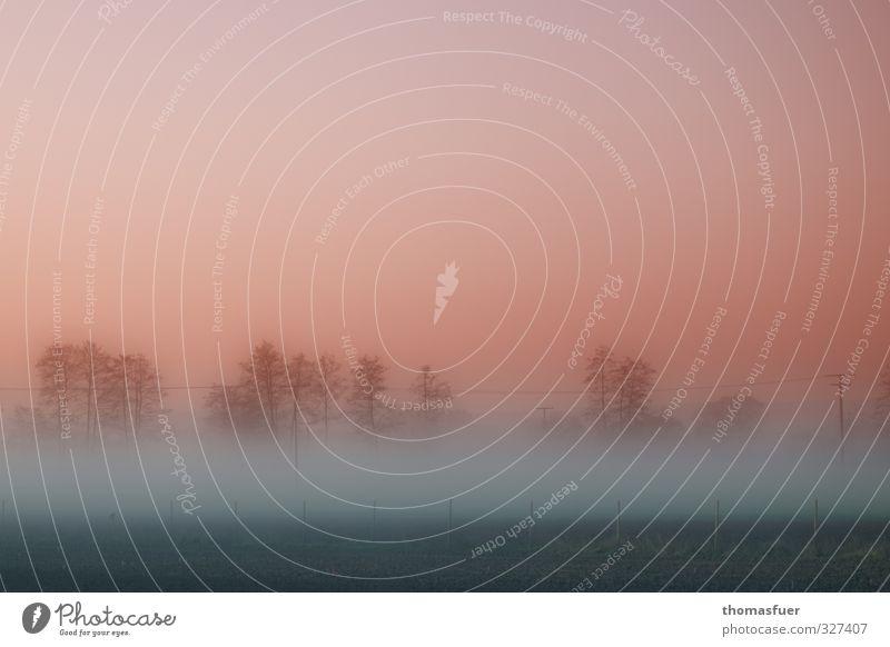 ohne titel Himmel schön Baum Farbe Landschaft ruhig schwarz Wald Wiese Frühling Traurigkeit träumen Luft Stimmung rosa Feld