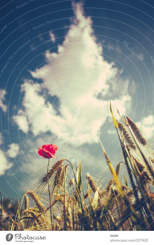 Mohna träumt Himmel Natur blau schön Sommer Pflanze rot Landschaft Wolken Umwelt Blüte Stimmung Feld Wachstum Schönes Wetter retro