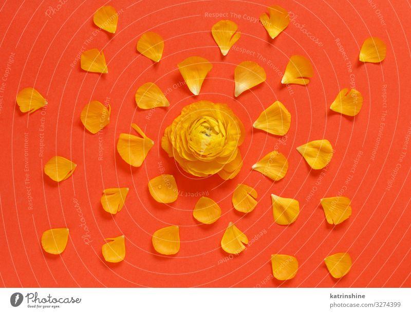 Gelbe Blumen und Blütenblätter auf rotem Hintergrund Design Dekoration & Verzierung Hochzeit Frau Erwachsene Mutter Rose hell gelb Kreativität romantisch orange