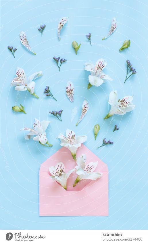 Blumen und Umschlag auf einem hellrosa Hintergrund Dekoration & Verzierung Hochzeit Frau Erwachsene Mutter oben blau weiß Kreativität romantisch Pastell