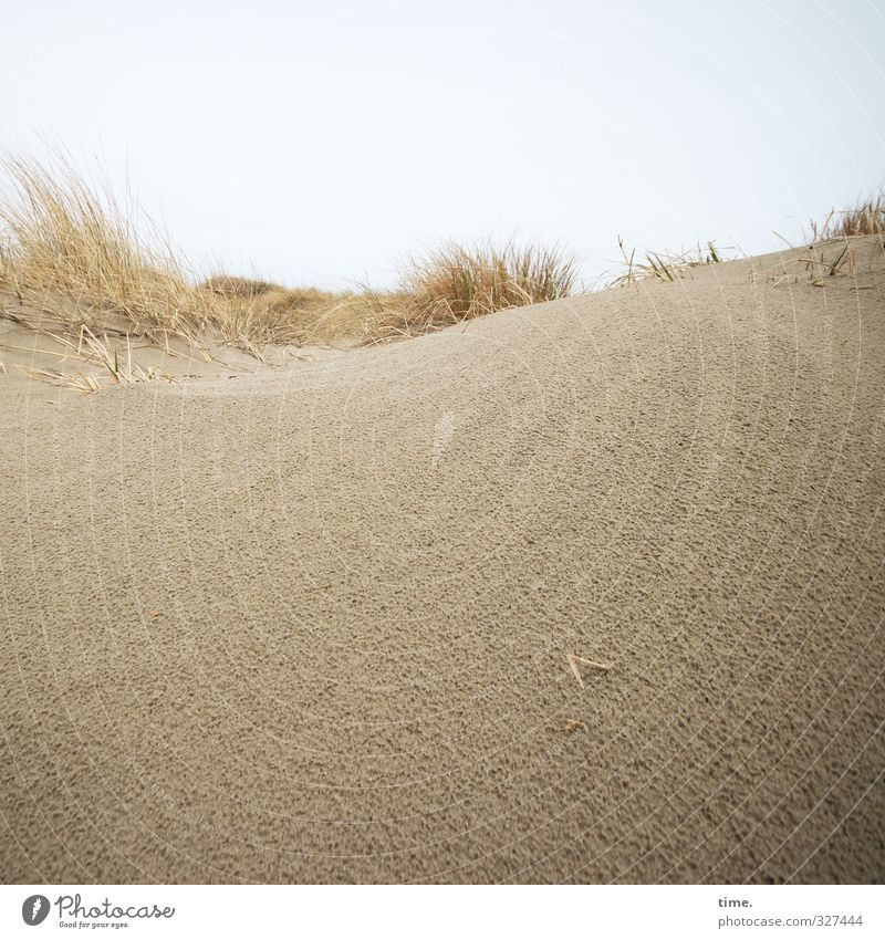 Rømø | Hinterland Umwelt Natur Landschaft Sand Himmel Horizont Küste Strand Nordsee Düne Dünengras kalt natürlich weich braun gelb Verschwiegenheit schön