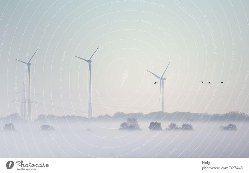 Frühnebel... Technik & Technologie Energiewirtschaft Windkraftanlage Umwelt Natur Landschaft Sonnenaufgang Sonnenuntergang Herbst Nebel Eis Frost Baum Moor