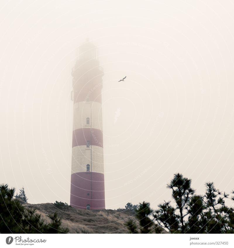 Zünde alle Feuer Luft Wolken schlechtes Wetter Nebel Insel Amrum Leuchtturm Vogel Möwe 1 Tier fliegen alt gelb rot schwarz weiß Farbfoto Gedeckte Farben