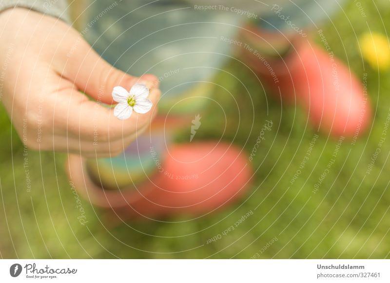 Blümchen klein.... Mensch grün schön Sommer Blume Hand rot gelb Gefühle Frühling Wiese Gras Glück Freundschaft Geburtstag