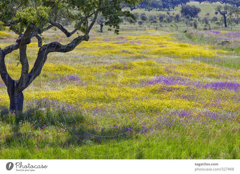 SCHÖN, NE?! JAA, SCHÖN! Portugal Algarve Baum Wiese Blumenwiese Feld mehrfarbig Blüte Landschaft Ferien & Urlaub & Reisen Reisefotografie Idylle Postkarte